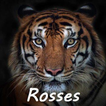 rosses