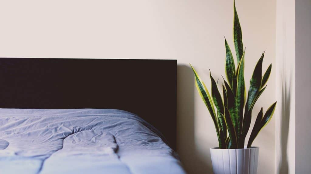 decora con planta sanseveria al lado de una cama con sábanas azules