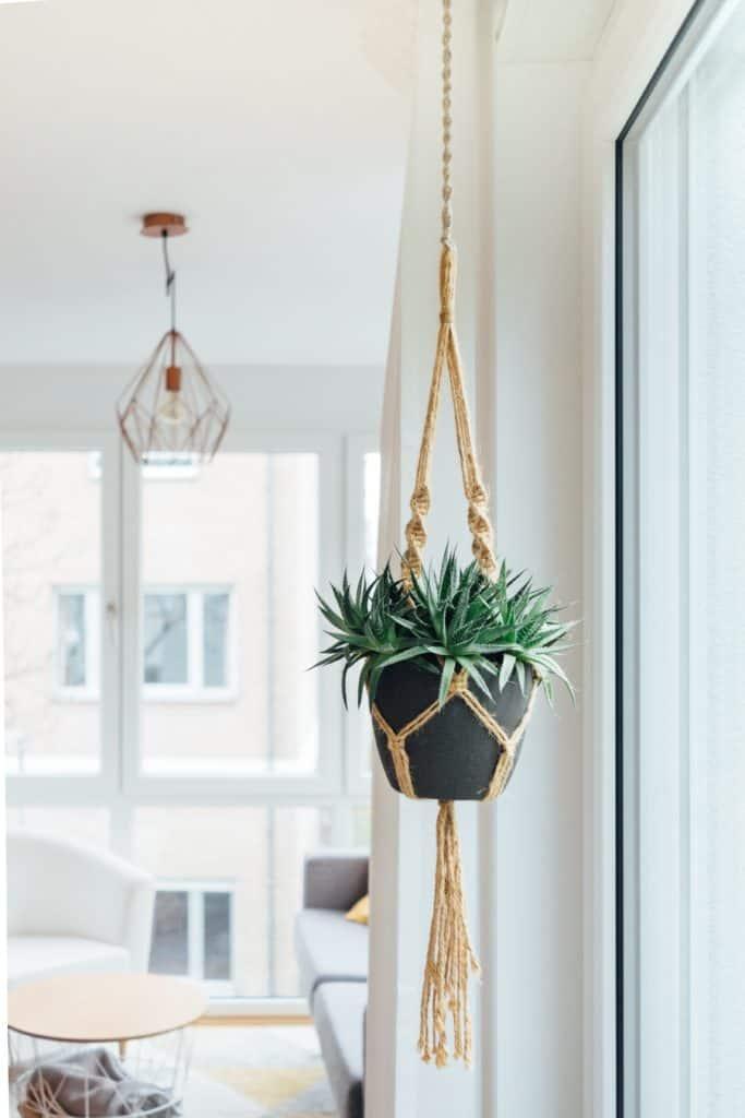 decora con suculenta en soporte de macramé colgada del techo
